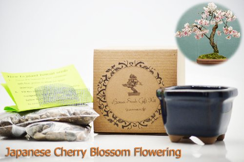 9GreenBox-Japanese-Cherry-Blossom-Flowering-Bonsai-Seed-Kit-Gift-Complete-Kit-to-Grow-Dwan-Red-Wood-Bonsai-from-Seed-0